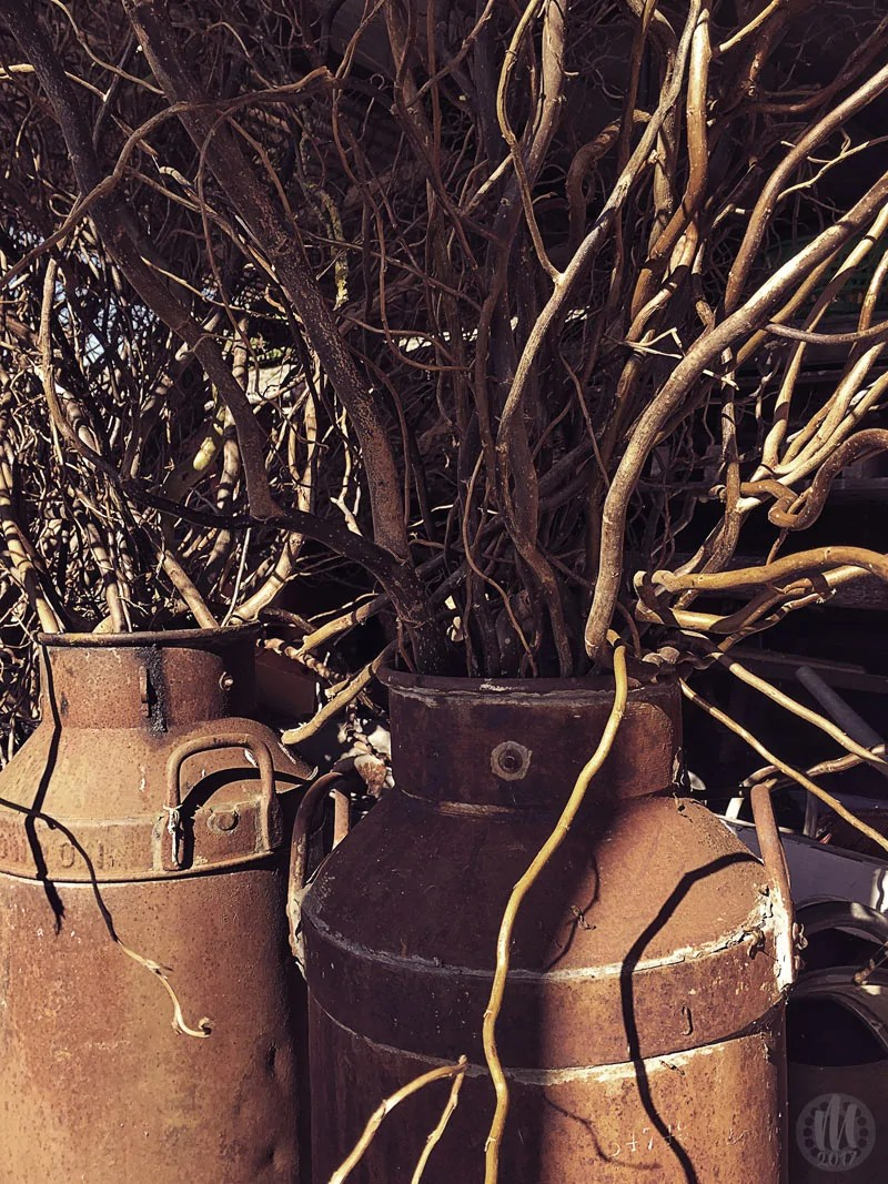 Project 365 - 2017 - Day 333 - old milk churners with branches inside them