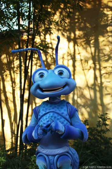 Animal Kingdom - Flik