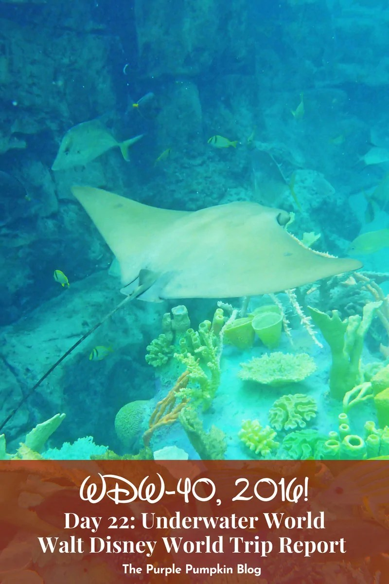 Things to do in Orlando - Discovery Cove. Discovery Cove is an all-inclusive day resort where you can swim with dolphins, rays, and hundreds of reef fish. Plus see tropical birds and other wildlife at this serene oasis in Orlando, Florida. Read about a day spent at this tropical paradise, with tips and lots of great photos