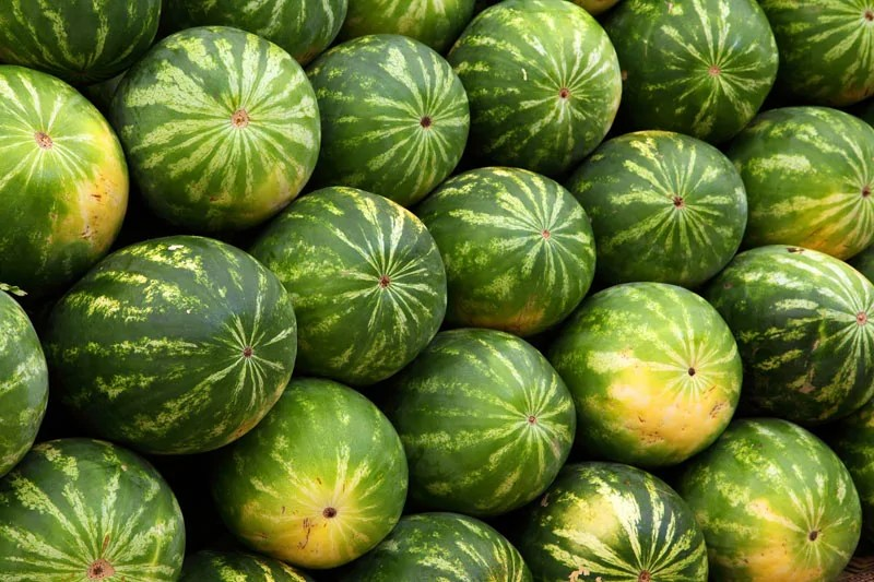 Pile of Fresh Watermelons