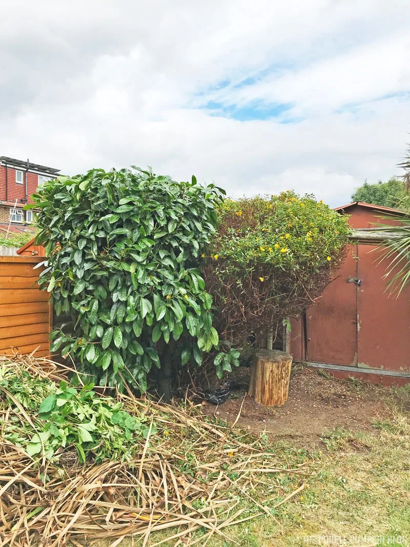 picture of cut back bushes