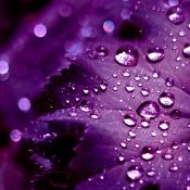 The Meaning of Purple - The Purple Store's Purple Blog
