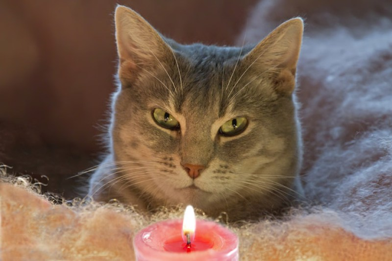 candles-cats