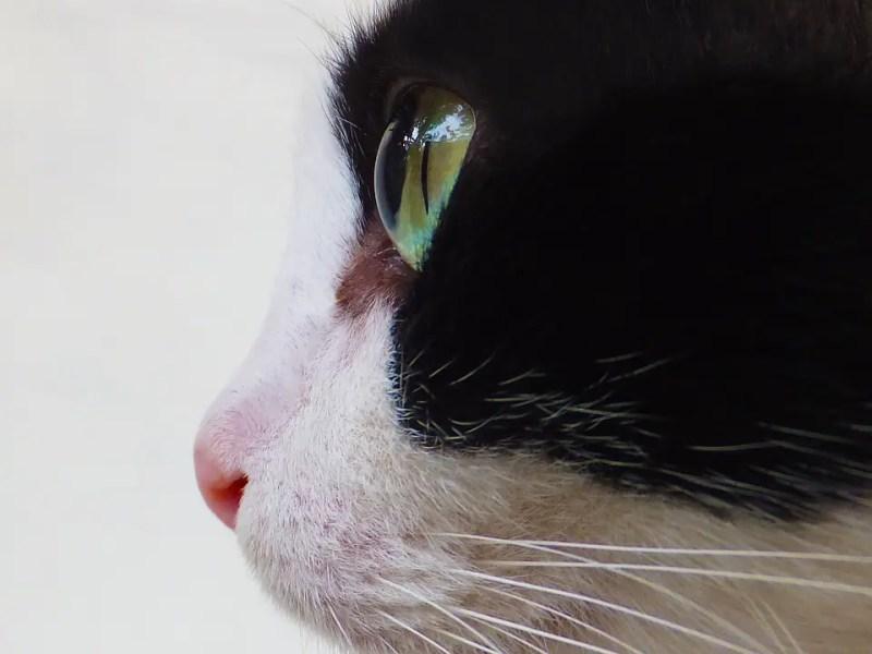 catnose2