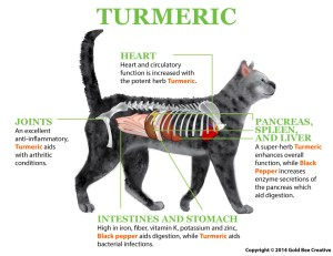 Turmeric for Cats