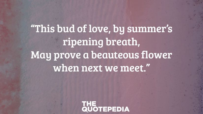 """""""This bud of love, by summer's ripening breath, May prove a beauteous flower when next we meet."""""""