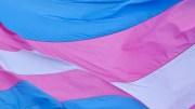 trans bill