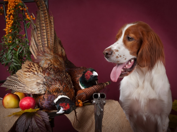 The Hunt: woodcock and hunting dog.