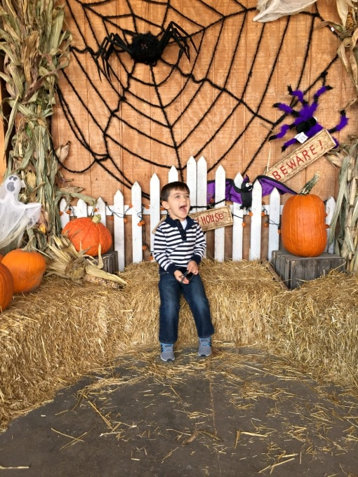 Wordless Wednesday - The Pumpkin Patch