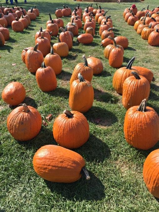 pumpkin-patch-15