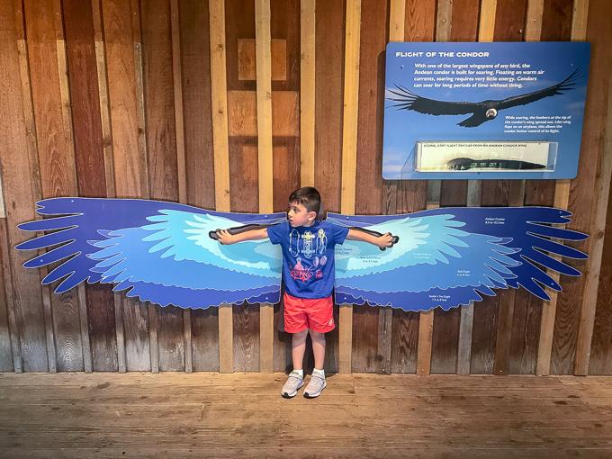 7 Ways to Make Family Memories at the Cincinnaiti Zoo