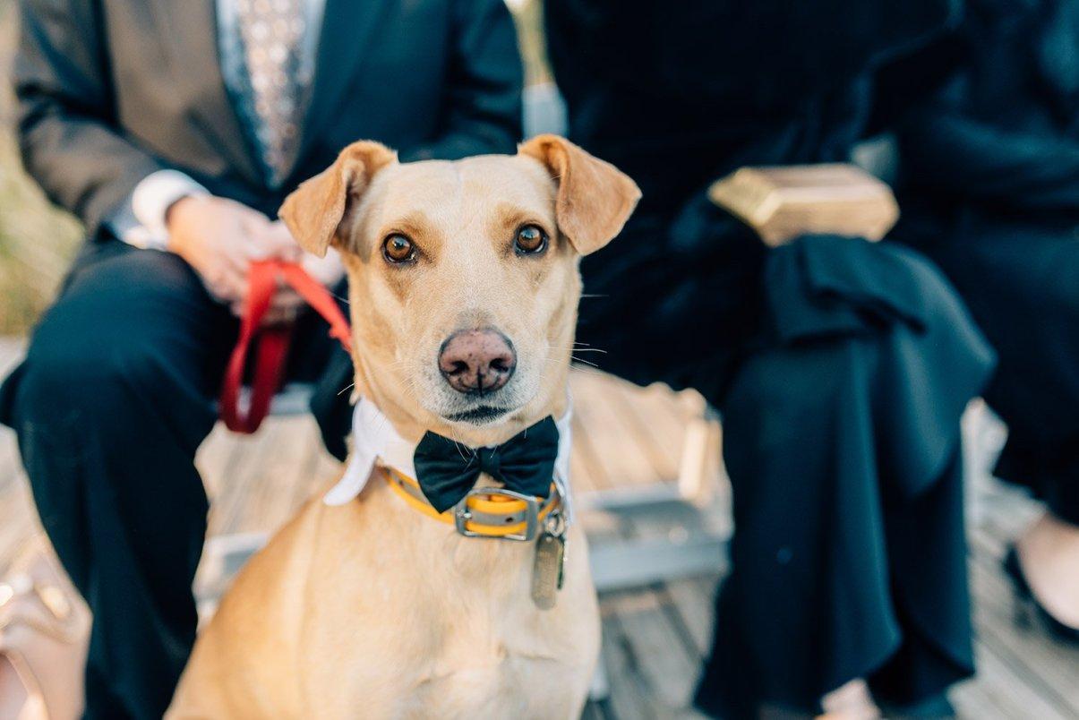 dog in a wedding