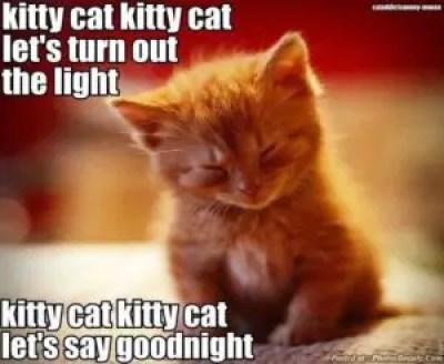 cute kitten good night images