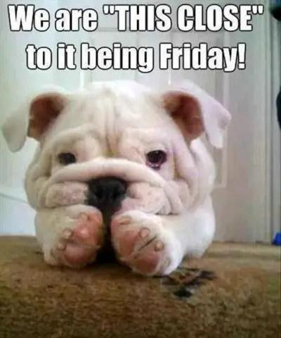 Thursday Dog Meme