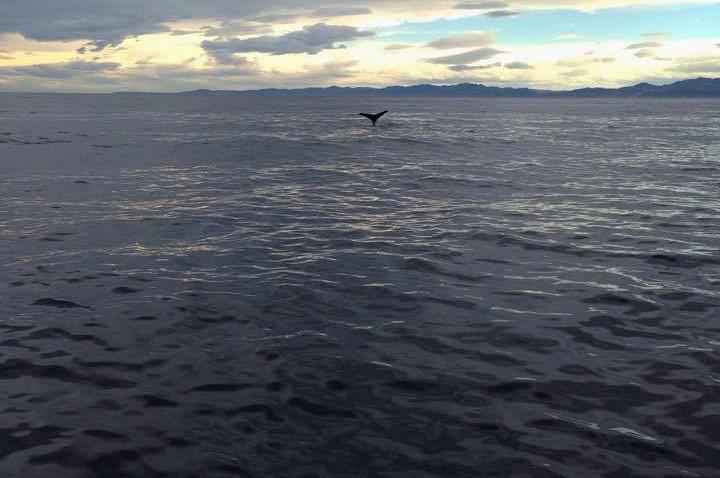 Whale-watching in Kaikora, New Zealand