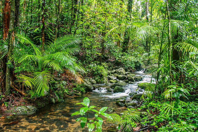 Mossman Gorge, Cairns