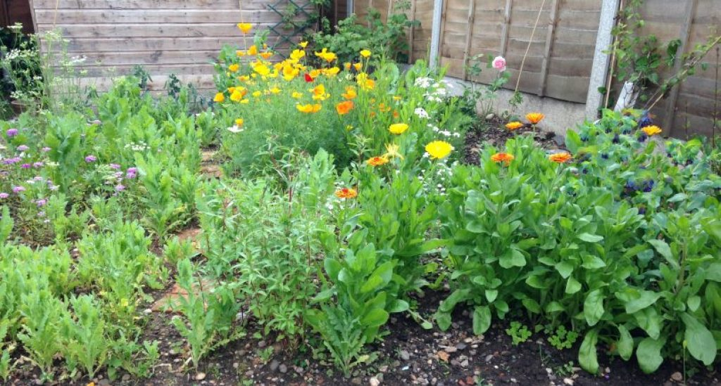 Creating a Cut-Flower Patch in 5 Easy Steps
