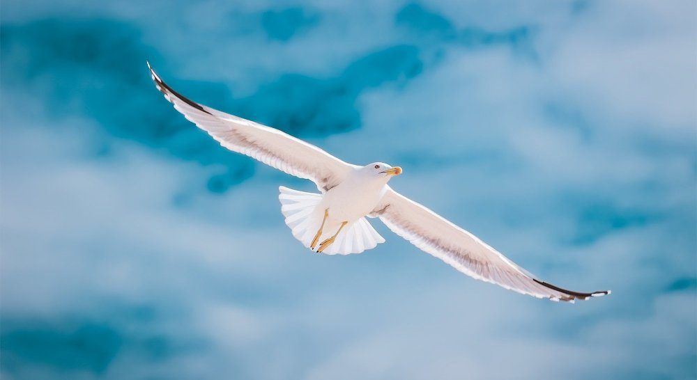 A seagull flying over Ria Formosa Natural Park in the Algarve
