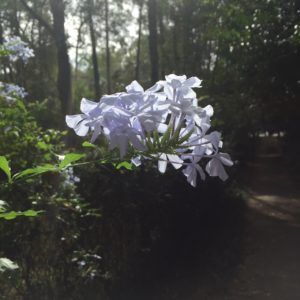 Neighborhood, Gainesville, west side, sunlight, shade, warmth, gratitude, grief, mourning, joy, flowers, blossoms, bloom, blooming, blooms
