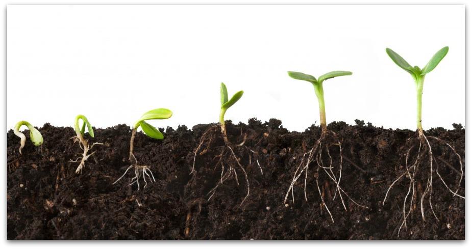 seed-growing2
