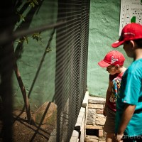 An outing to Lory Park Zoo in Midrand