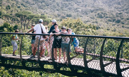 A walk through Kirstenbosch