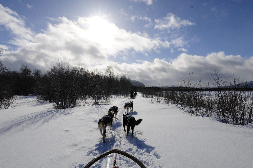 Dog Sled scenery