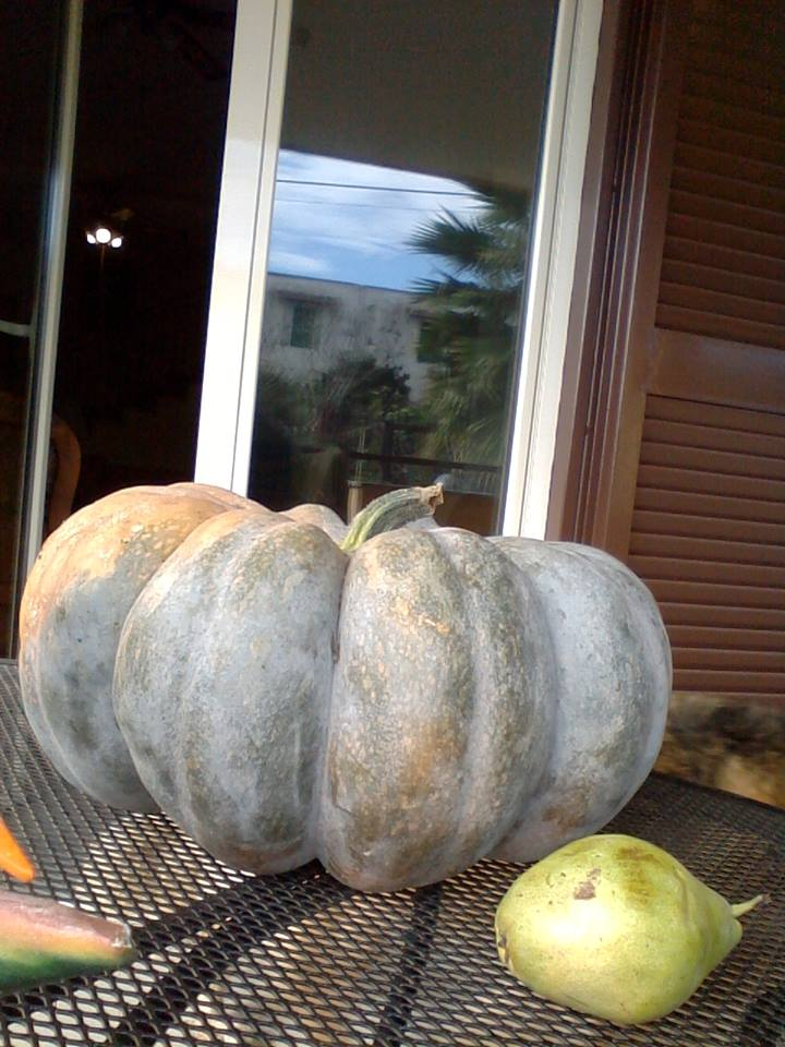 Pumpkin from Armando