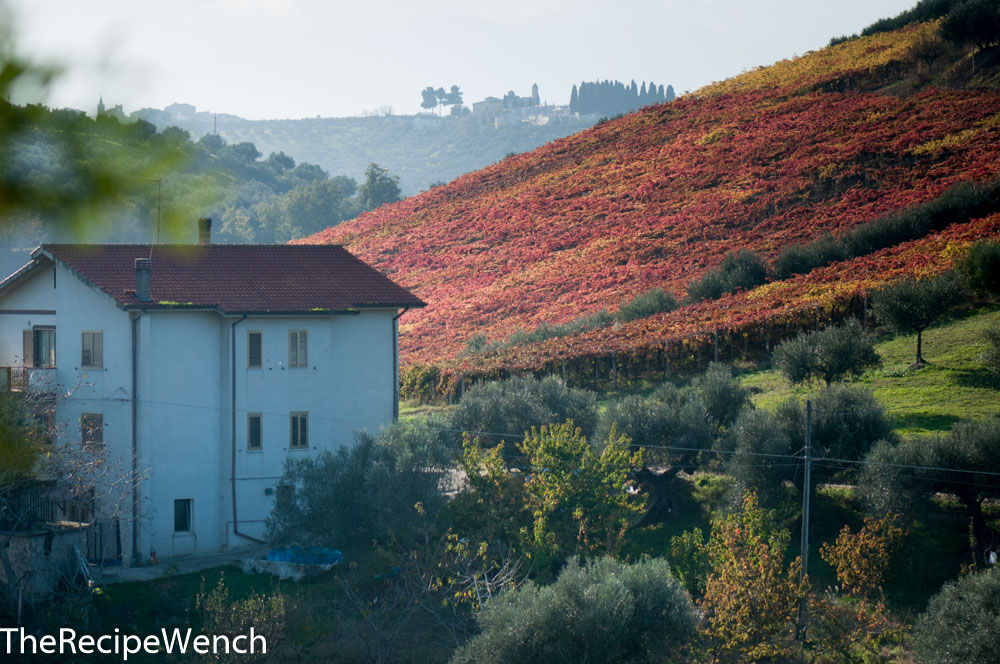 Pescara fall colored hillside