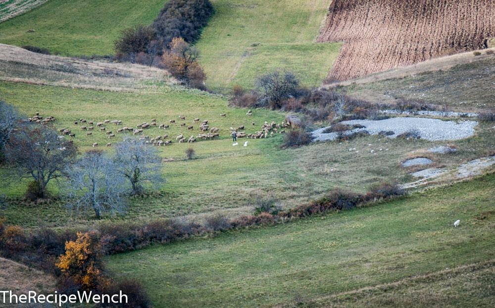 Rocca Calascio shepherd and herd