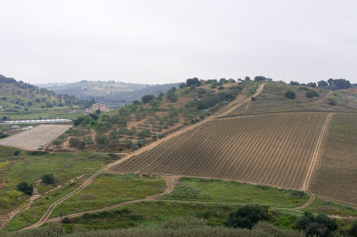 Gorgeous fields along the road in Sicily