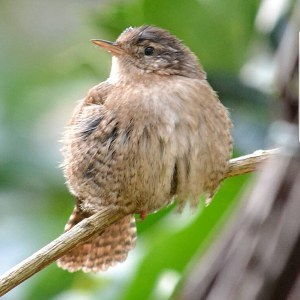 The Reed Warbler Instagram