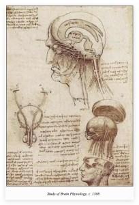 Leonardo da Vinci study of brain