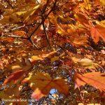 leafcrazies2