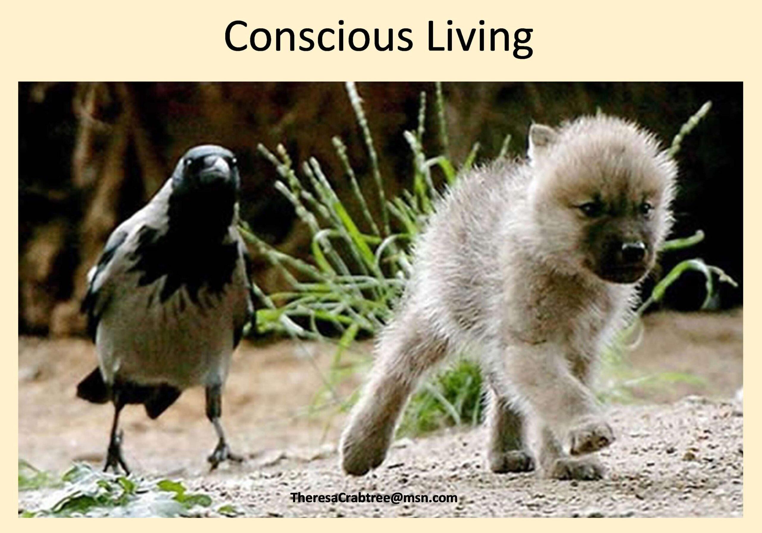 Conscious Living: Video