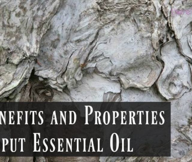 The Benefits And Properties Of Cajeput Essential Oil Theres An Eo For That