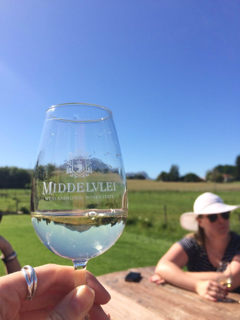 Wine and Wildlife: 3 Day Trips from Cape Town - Wine tasting and lunch at Middelvlei wine estate in Stellenbosch.