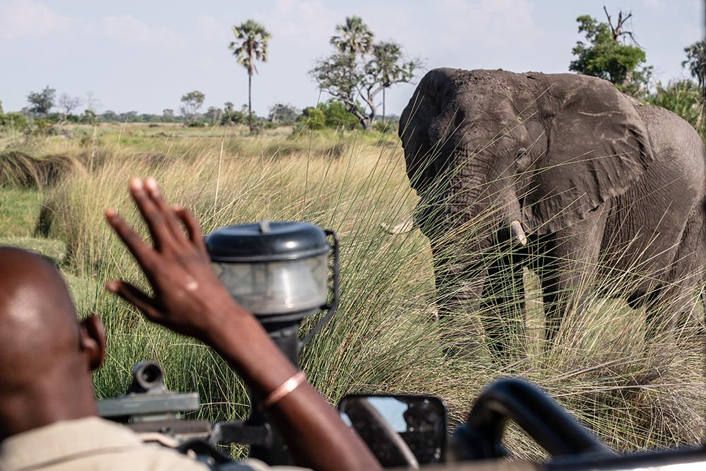 Elephant in front of safari vehicle