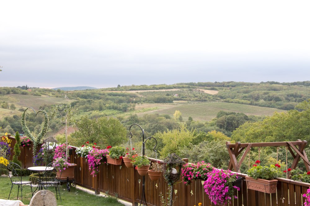 Green hills and pink flowers