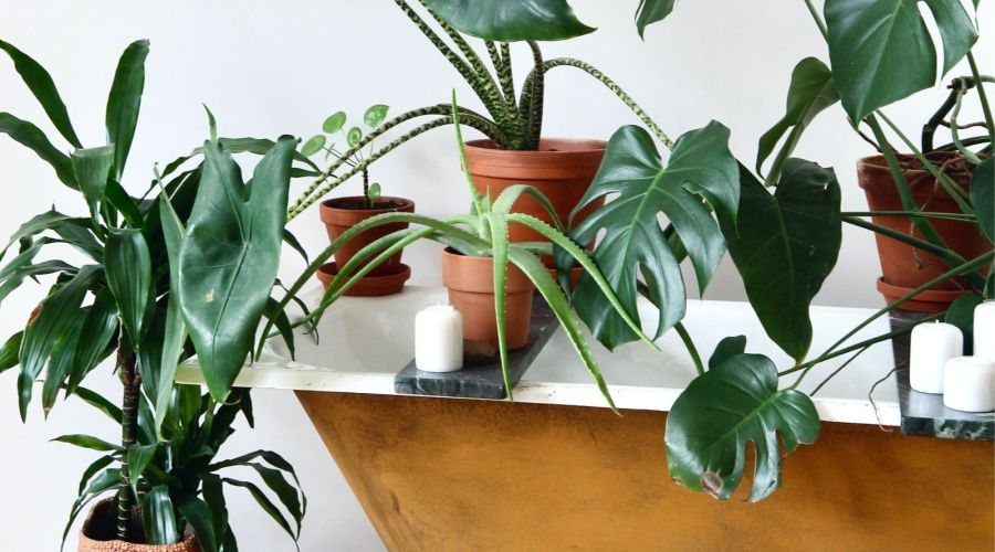 plants inside and on top of gold bathtub