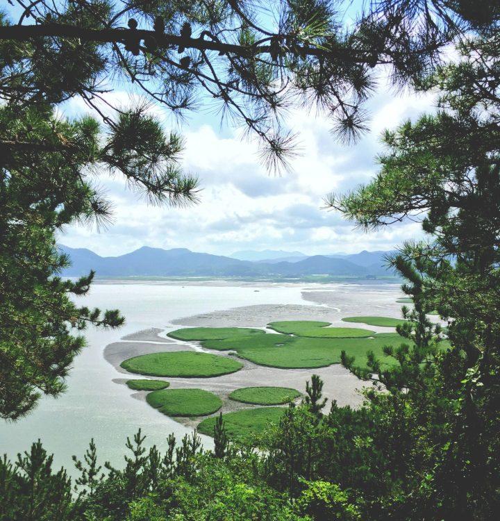 View of Suncheon Bay, Korea