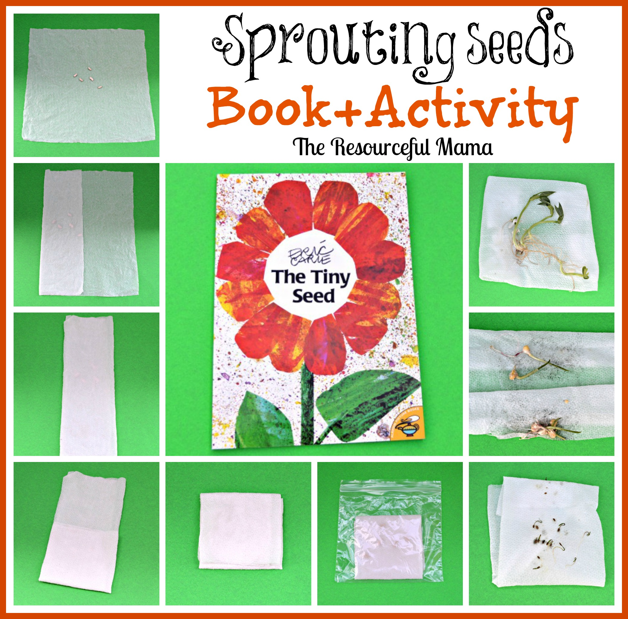 Book Craft The Tiny Seed