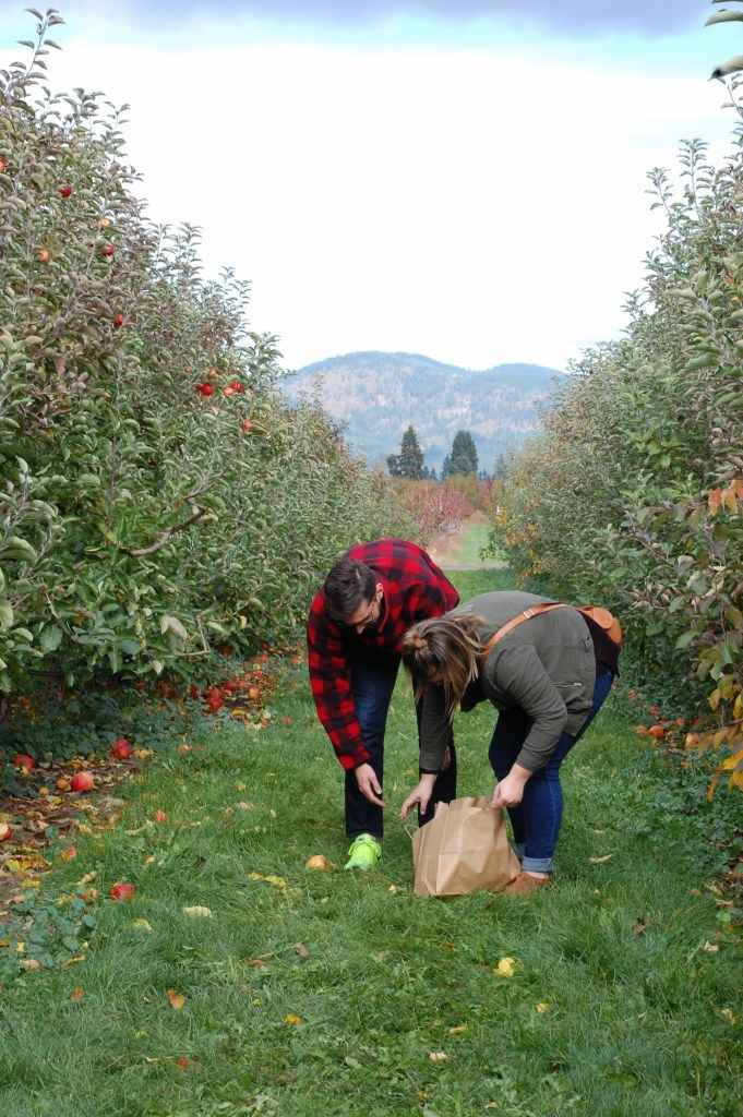 Apple Picking at Kiyokawa Family Orchards near Hood River | theringers.co