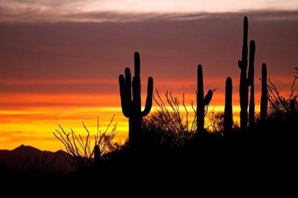 Drug and Alcohol Treatment Arizona