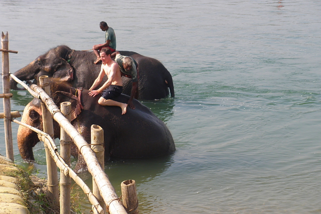 Elephants bathing in the river at Chitwan National Park, Nepal