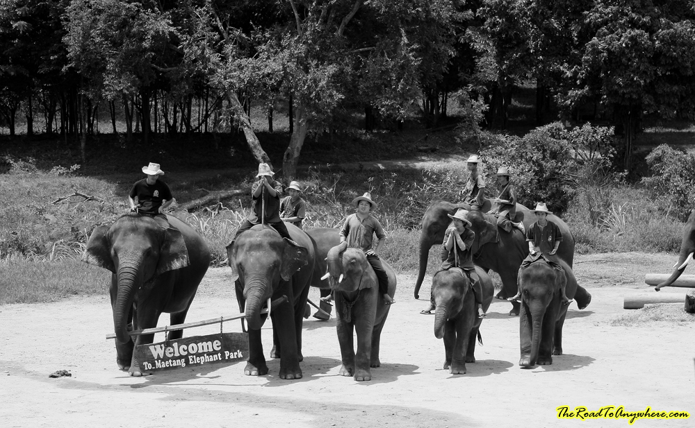 photo essay an elephant camp in black and white elephant show at an elephant camp near chiang mai thailand