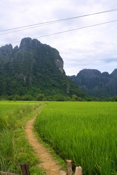 A path running through a rice field in Vang Vieng, Laos
