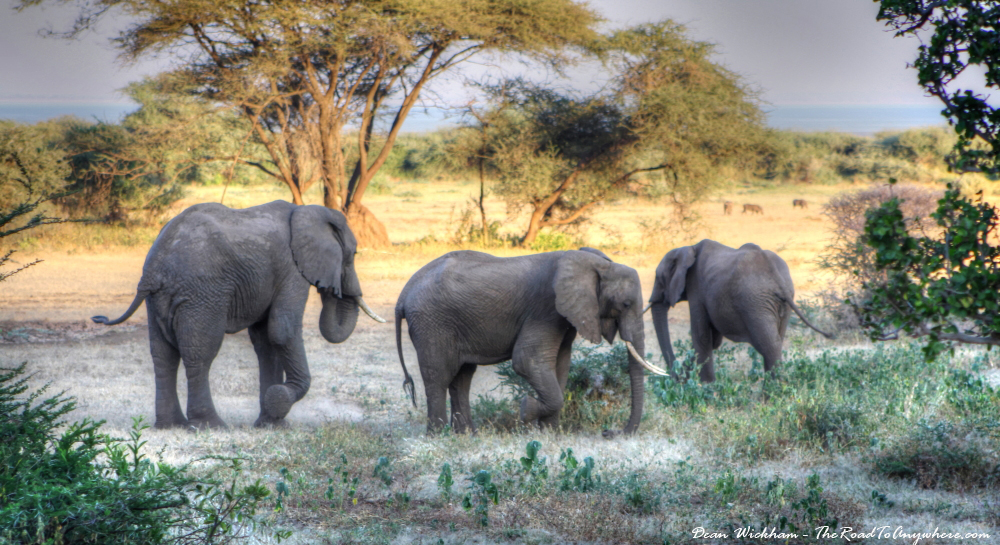 A group of elephants in Lake Manyara National Park, Tanzania