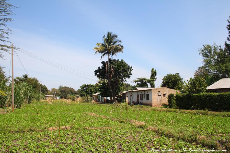 A field of beans at a farm in Mto wa Mbu, Tanzania