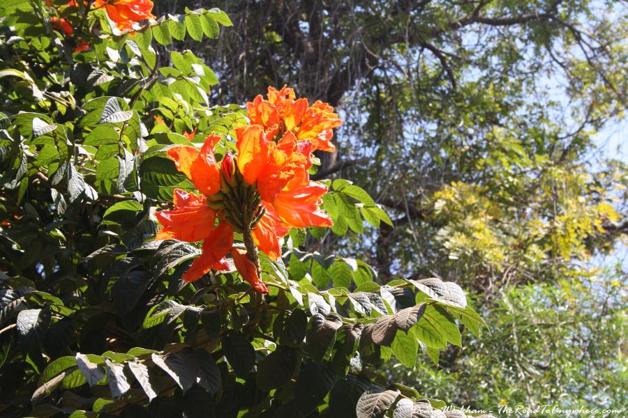 An orange flower in Mto wa Mbu, Tanzania